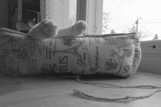 Kissan tassut pedin reunalla.